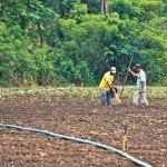 SECA PREJUDICA AGRICULTORES E PESA NO BOLSO DO CONSUMIDOR